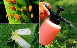 Как бороться с белокрылкой в огороде