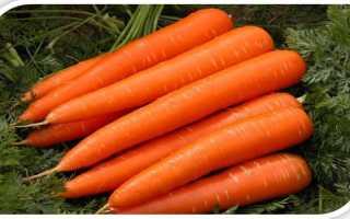 """Морковь """"Королева осени"""": описание сорта, фото, отзывы"""
