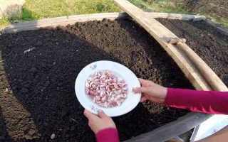 Посев чеснока под зиму: когда сажать и как