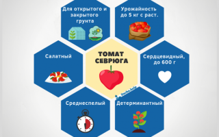 "Томат ""Севрюга"": характеристика и описание сорта, отзывы, фото"