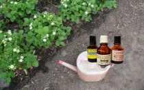 Йод для клубники от болезней и вредителей: подкормка и обработка ягод