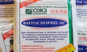 Фитоспорин для комнатных растений: инструкция по применению, описание