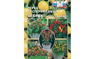 Перец Огонек на подоконнике: выращивание, посадка и уход