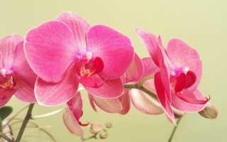 Виды орхидей с фото и названия