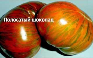 """Томат """"Полосатый шоколад"""": описание сорта, отзывы, фото"""