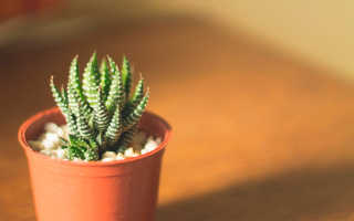 Колючие растения с фото и названиями