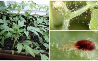 Паутинный клещ на рассаде перца: фото, меры борьбы