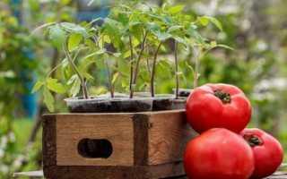 Как определить дни, которые благоприятны для посадки помидор
