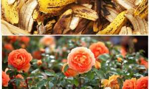 Дачные хитрости или полезные советы для садовода и огородника