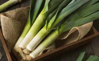 Как сажать и выращивать лук-порей в открытом грунте