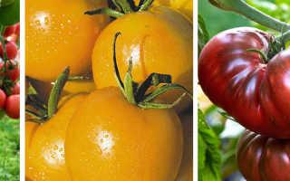 Самые урожайные и вкусные сорта томатов для теплицы