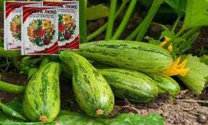 Чем подкормить тыкву и кабачки в открытом грунте