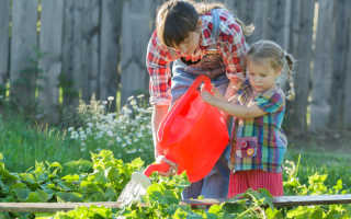 Подкормка огурцов в открытом грунте народными средствами
