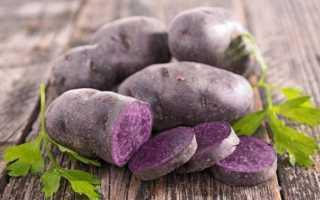 Фиолетовый картофель – сорта, посадка и уход, фото и видео