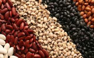 Как прорастить фасоль в домашних условиях