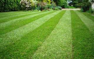 Посев газона своими руками: пошаговая инструкция, видео