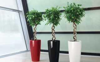 Комнатные растения, которые любят тень: названия, фото, описания