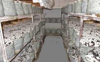 Как выращивать шампиньоны в подвале – простая технология