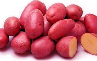 Картофель «Ред Скарлетт» – описание сорта, выращивание и уход, характеристики клубней