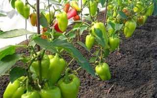 Чем подкормить перец в теплице из поликарбоната