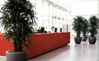 Неприхотливые цветы для офиса – фото + названия
