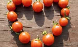 Ранние и морозостойкие помидоры: сорта