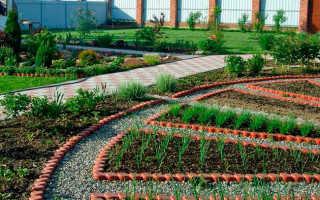 Вредители сада и огорода: фото с названиями