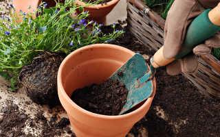 Как и когда лучше пересаживать комнатные растения