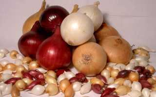 Как посадить лук-севок в открытый грунт