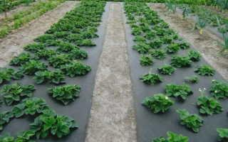 Посадка клубники на агроволокно – инструкция, видео