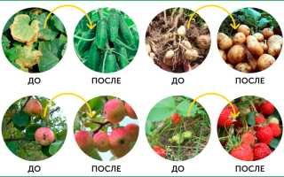 Биоудобрение 4К: отзывы, стоимость, инструкция по применению удобрения