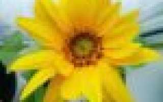 Плесень в цветочном горшке – как избавиться и не допустить в будущем
