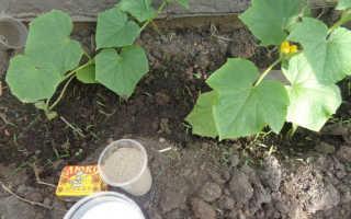 Как подкормить огурцы дрожжами в теплице и открытом грунте